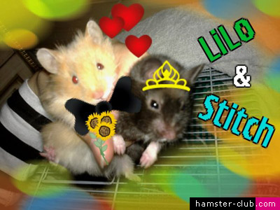 Hamsters' Wallpaper